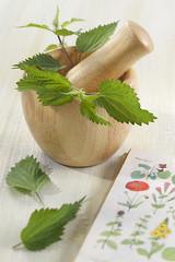 Ortie - Plante médicinale