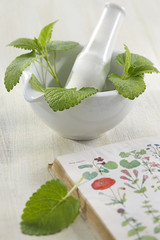 Citronnelle - Plante médicinale