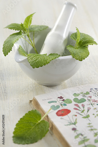 citronnelle plante m dicinale stock photo and royalty free images on pic 52470409. Black Bedroom Furniture Sets. Home Design Ideas