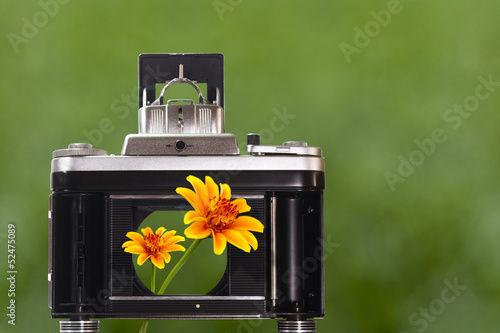 Beautiful flowers to look through the camera shutter