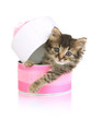 Small kitten in pink gift box isolated on white
