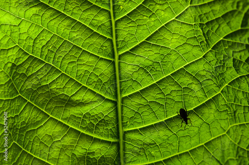 Beetle on leaf