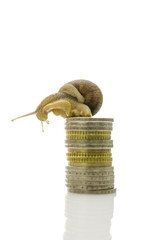 Snail sitting on top of coin stack