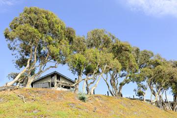 casa fra gli alberi
