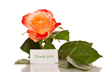 Thanks to the blooming roses