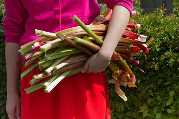 Armful of rhubarb