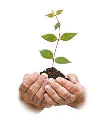 sapling in hands