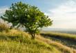 albero e sentiero al tramonto