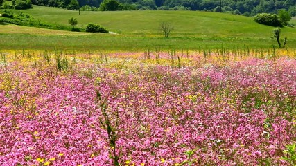 Colorful pasture in spring in mild wind.
