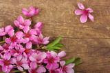 blossom on wood