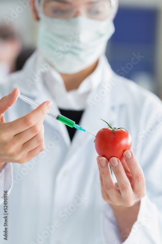 Student  injecting liquid in a tomato