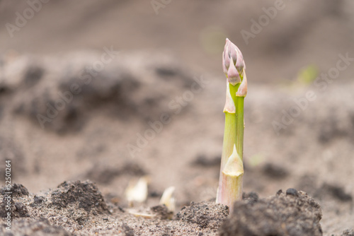 Asparagus on the field