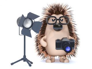 Cute hedgehog has his own studio