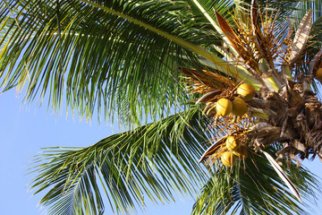 Palm tree and vacation in caribbean sea ヤシの木 南の島