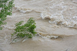 green trees of Elm and Hazel immersed in mud overflown river wat