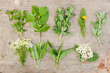 Variety of fresh herbs