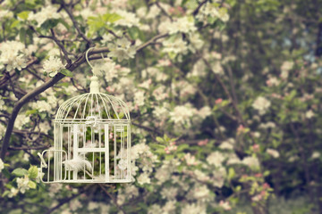 Birdcage In Blossom