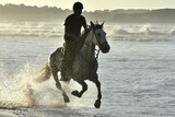 Riders and her horse gallop along the beach