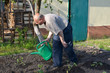 The elderly man waters a kitchen garden from a watering can
