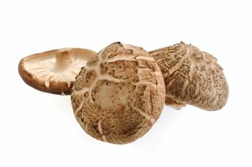 Shiitake mushrooms on white