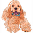 Vector cute sporting dog breed American Cocker Spaniel