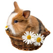 little spring rabbit in a basket with daisy flowers