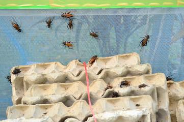 crickets in egg tray condominium