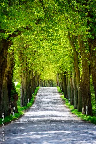 Landstraße Natur mit Baumallee 5