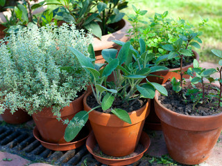 pots with herbs