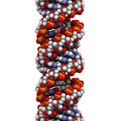 DNA (A-DNA conformation) structure