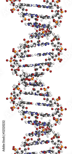 DNA structure, B-DNA form.