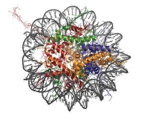 Nucleosome, molecular model.