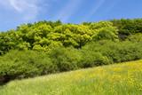 Pré fleuri, forêt au printemps
