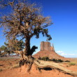 View of Monument Valley and tree