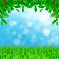 Green leaves and grass on the sky background