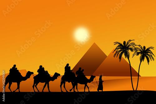 Fototapeten,kamel,dromedar,pyramiden,agressivität