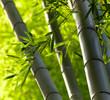 Fototapeten,bambus,stengel,blatt,wald