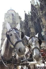 Fiakergespann vor dem Stephansdom in Wien