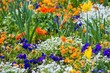 Different colourful beautiful flowers on flowerbed