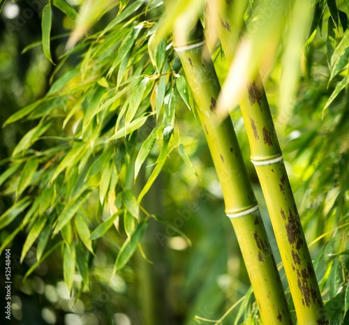 Close-up of a bamboo plant © Nejron Photo