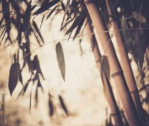 Toned picture of a bamboo plant © Nejron Photo