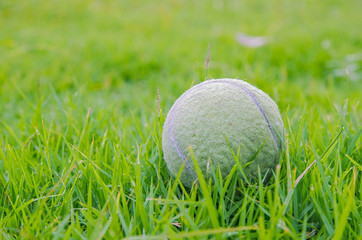 a tennis ball on the grass