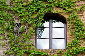 window with creeper