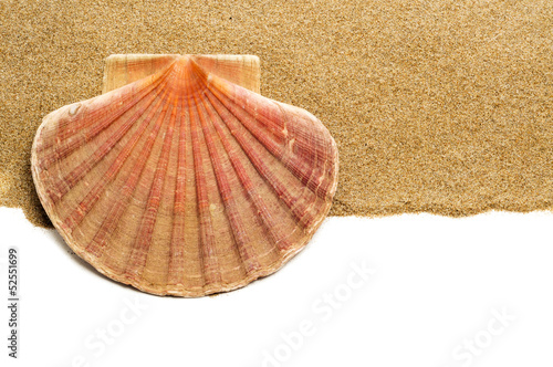 scallop shell on the sand