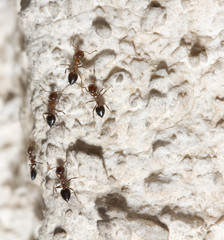 ants on the wall. macro