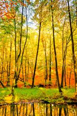 Buchenwald mit Bach im Herbst