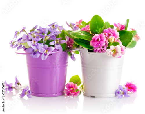flowers in bucket with green leaves isolated on white background