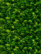 seamless texture of green leaves