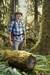 Hiker in temperate rainforest