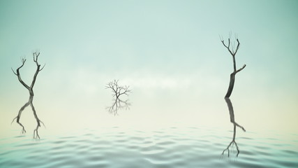 River with old trees and fog loop